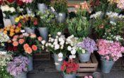 Marktplatz Blumenstand 20180430